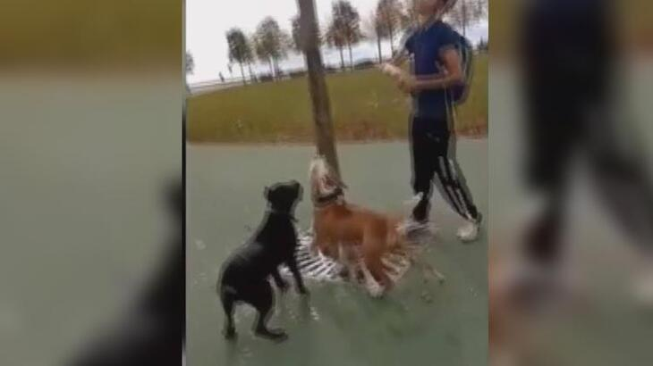 Maltepe'deki pitbull vahşetinde 3 gözaltı!