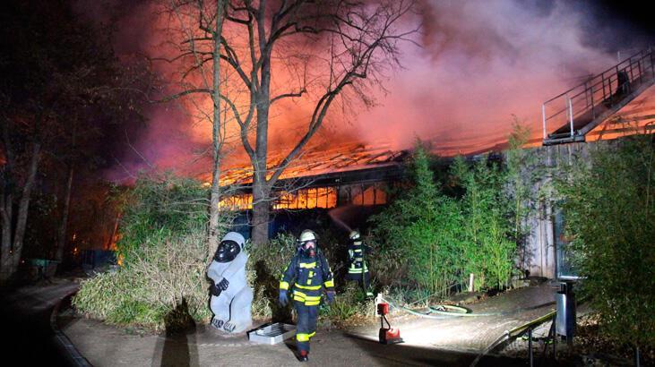 Hayvanat bahçesi yılbaşı gecesi yandı, tüm maymunlar öldü