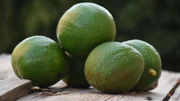 Alanyalı avokado üreticilerinin hedefi 20 ülkeye ihracat