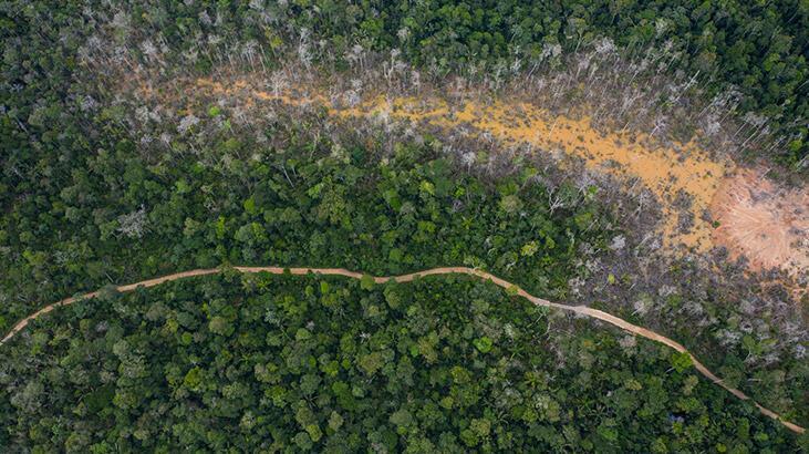 Ormanda 34 gün 'meyve yiyerek' hayatta kalan anne ve çocukları bulundu