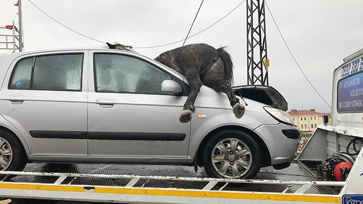 Son dakika... İstanbul'da korkunç kaza! At ön camdan girdi