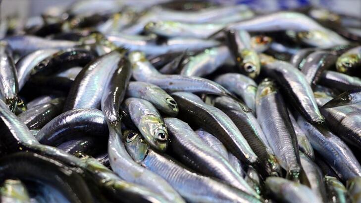 İstanbul'da 2019'da en çok tüketilen balık hamsi oldu