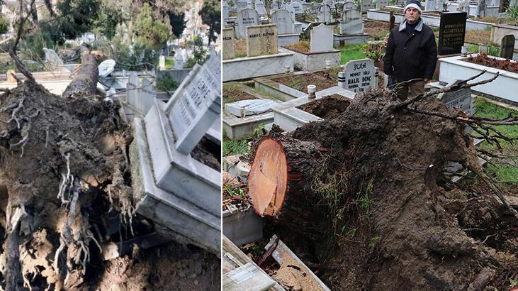Mezarlığa gelen gözlerine inanamadı! Yerinden söküldü