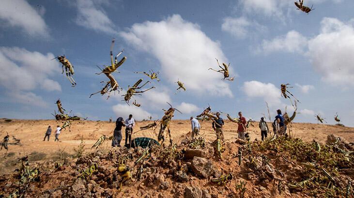 Doğu Afrika için 'çekirge felaketi' uyarısı