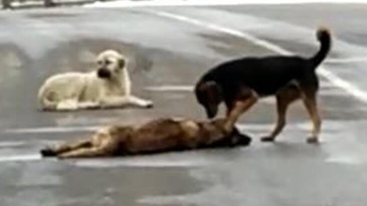Otomobilin çarpıp telef ettiği köpeğin başından ayrılmadılar