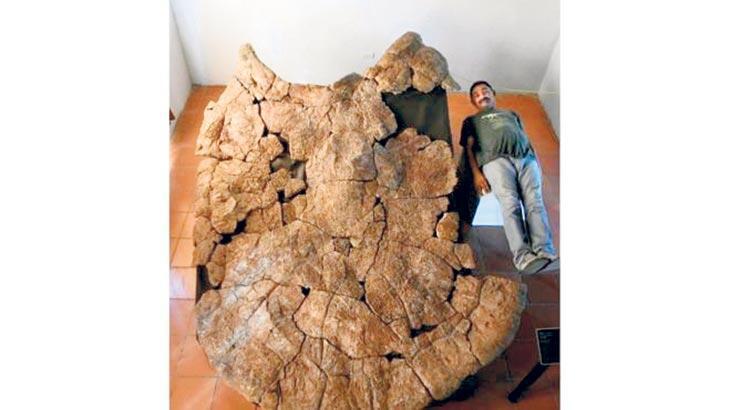 Bir araba boyunda fosil