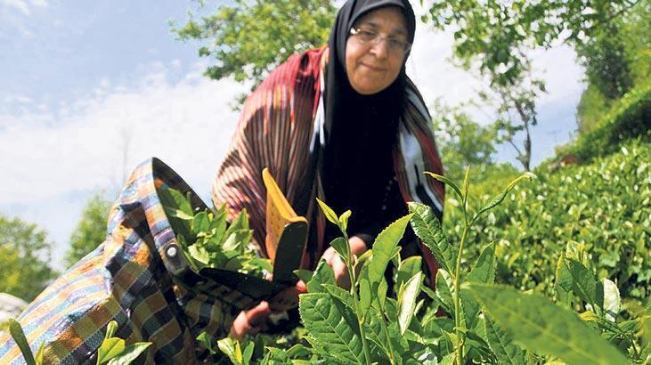 Çay üreticisi Rize ithalatta 1. oldu!