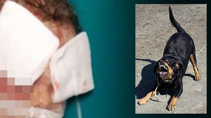 Anne yaşadığı dehşeti anlattı: Köpek çocuğumun kafasını ağzına aldı