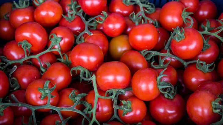 Rusya'nın Türkiye'den domates alım kotasını artırması ihracatçıları sevindirdi