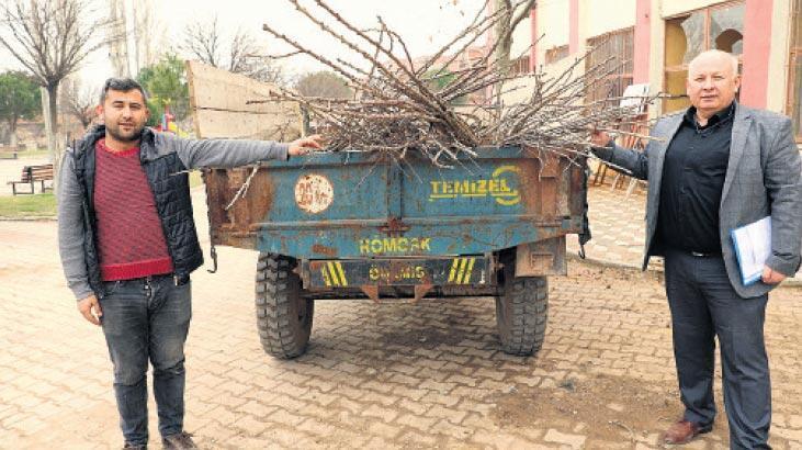 Akhisar'da artık kiraz yetişecek