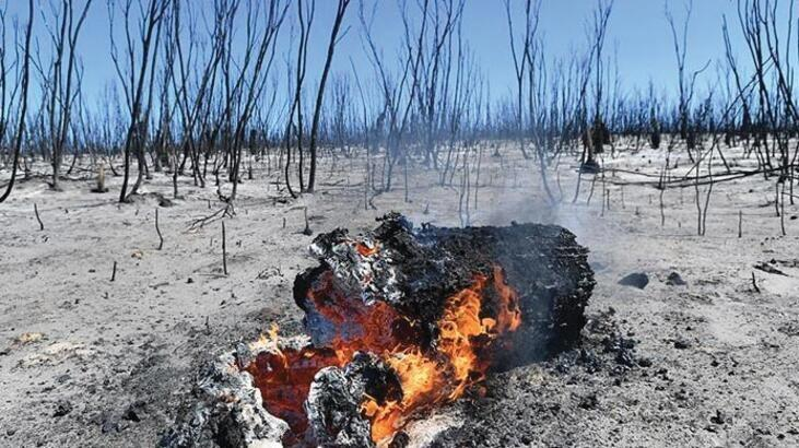 Avustralya'daki yangınlarla ilgili kabus gibi açıklama!