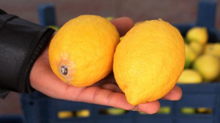 Limona talep arttı