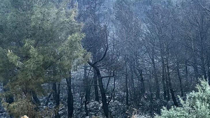 Kaş'ta 70 dönüm orman ve 4 dönümlük zeytinlik alev alev yandı!