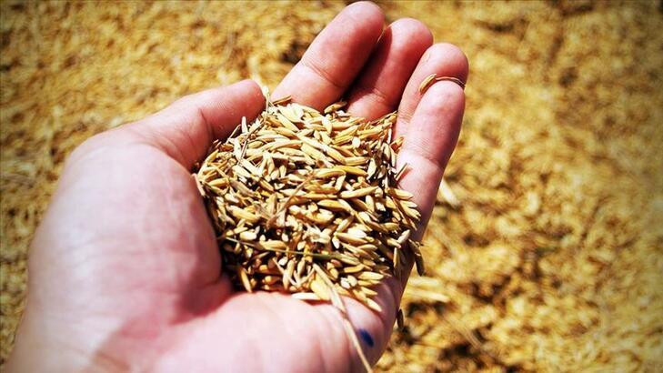 Tohumda yüzde 75 hibe tarımda üretimin artmasına katkı sağlayacak