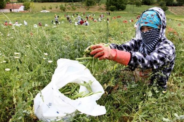Yenişehir Ovası mevsimlik tarım işçilerini bekliyor