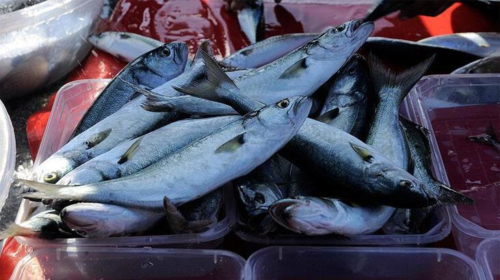 Lüfer balığı nasıl pişirilir? Tavada ve ızgarada lüfer balığı pişirme
