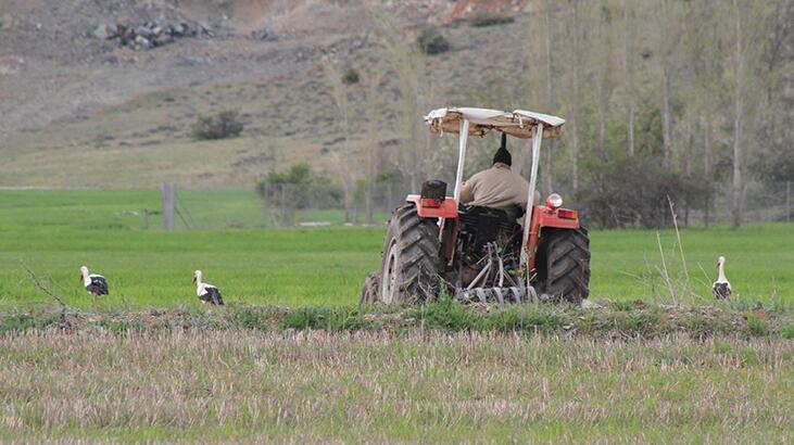 Konya'da traktörün geldiğini gören leyleklerin şaşırtan avı