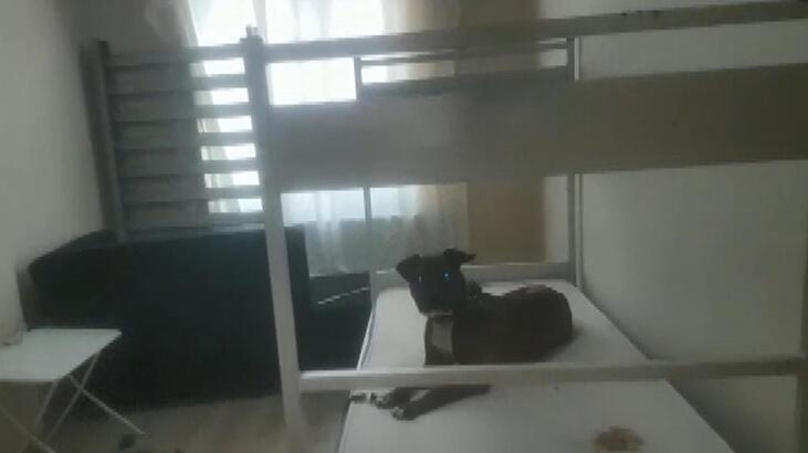 Esenyurt'ta 'köpeğine işkence' operasyonu