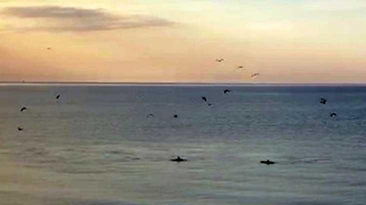 Yunuslar, Tekirdağ sahilinde görüntülendi