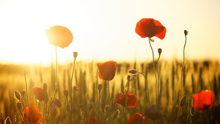 Doğanın uyanış günü Hıdırellez