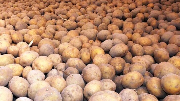 Tonu 500 doların altındaki patates ithalatına gözetim