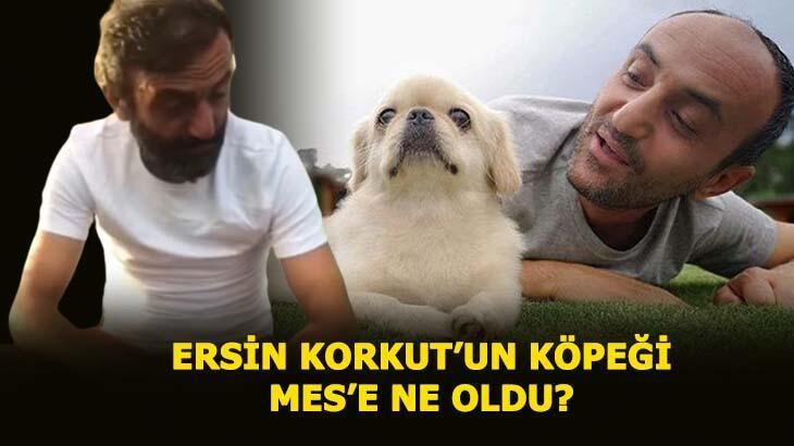 Ersin Korkut'un köpeği Mes'e ne oldu, neden öldü? Survivor Ersin Korkut'un röportajı ve paylaşımının detayları...