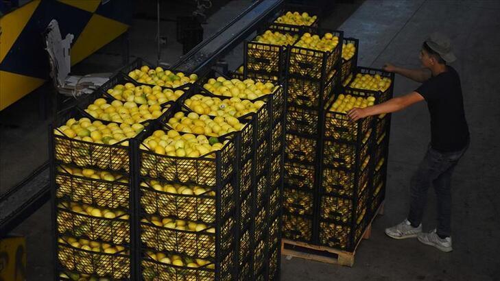 Limonda 10 bin tonluk dış satım izni ihracatçıları ve üreticileri sevindirdi