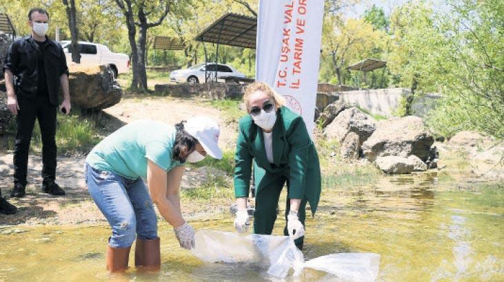 Uşak'ta 22 gölete 67 bin sazan balığı