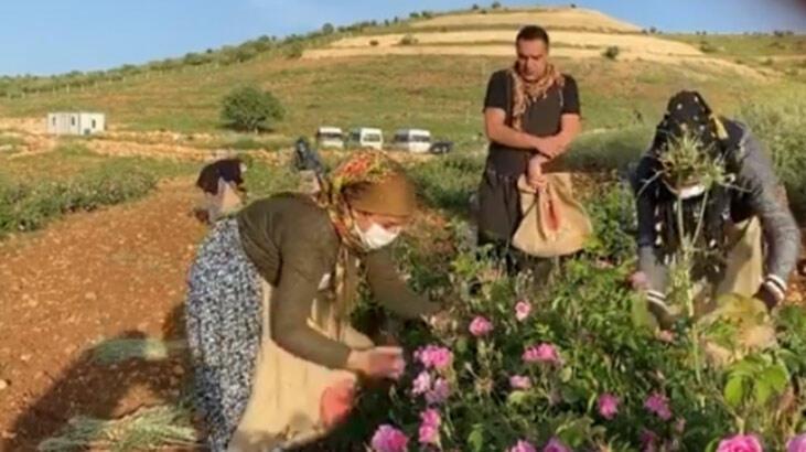 Berdan Mardini'ye hasat sırasında sürpriz