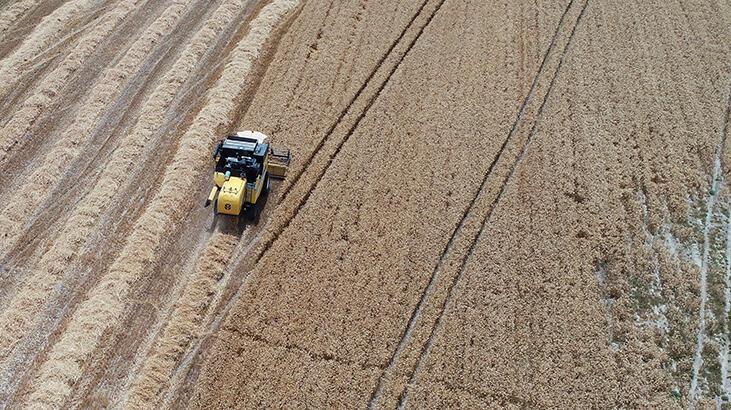 Buğday rekoltesi çiftçiyi sevindirdi