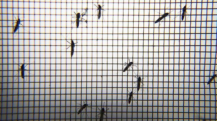Corona virüs sivrisineklerden bulaşır mı? Flaş açıklama