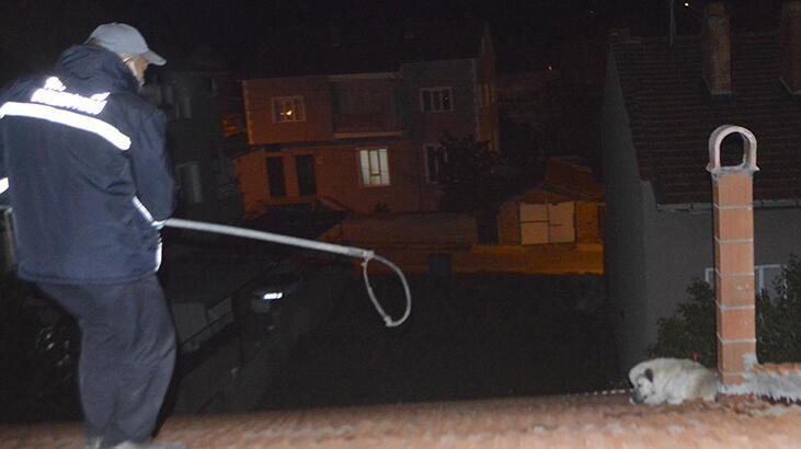 Çatıdan inemeyen köpeği itfaiyeciler kurtardı