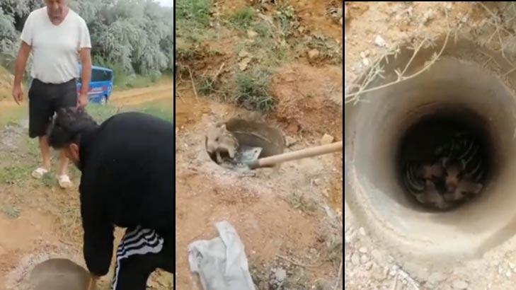 Çukura düşen yavru domuzlar kurtarıldı!