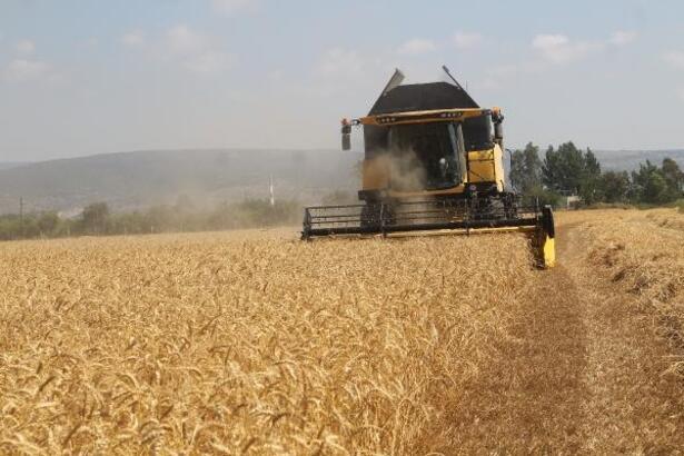 Silifke'de buğday hasadı başladı