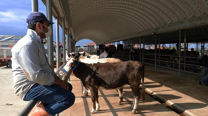 Edirne'de canlı hayvan pazarı tedbirlerle açıldı