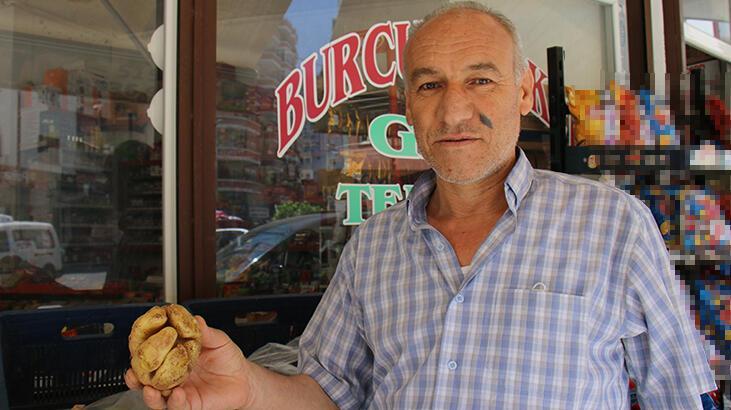 Mersin'de yumruk şeklindeki patates görenleri şaşırtıyor