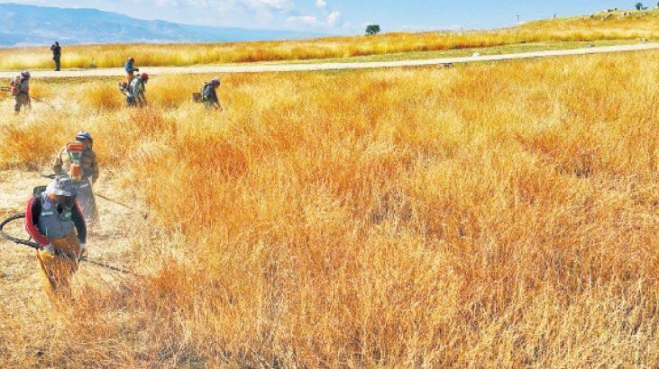 Laodikya'da ot temizliği