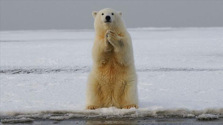 1 milyona yakın hayvan ve bitki türü yok olma riski altında!