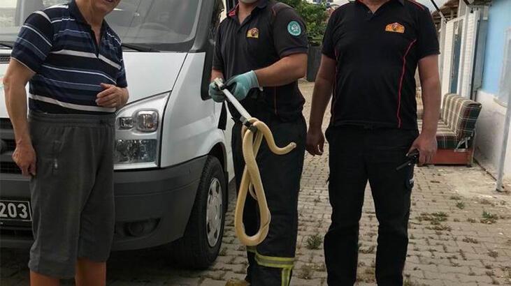 Manisa'da evde yılan paniği
