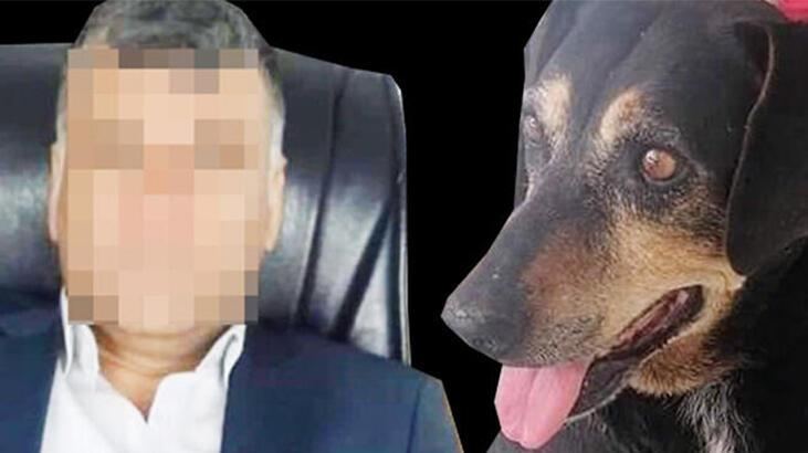 Son dakika... Sosyal medya ayağa kalktı! Bir ay boyunca köpeğe işkence ve tecavüz...
