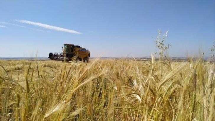 Arpa, buğday sapı kazanç kapısı oldu
