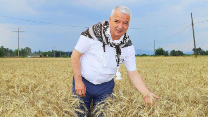 Buğdaylar, ihtiyaç sahiplerine gidecek