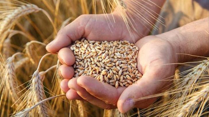 Buğdayda 2020 rekoltesinin 20,5 milyon tona ulaşması bekleniyor