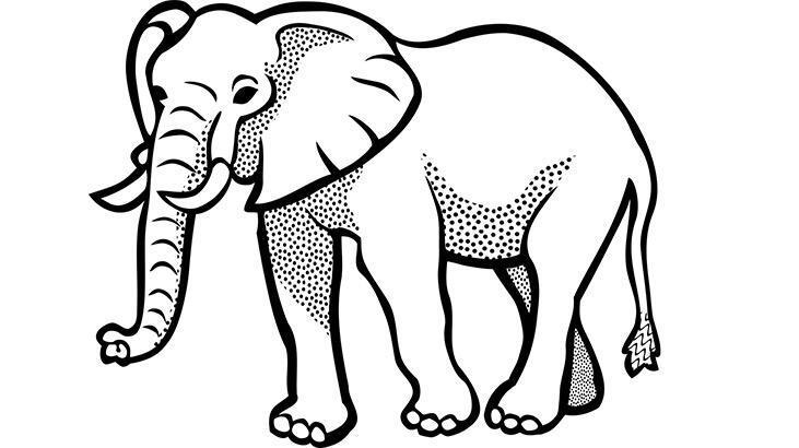 Fil boyama sayfası