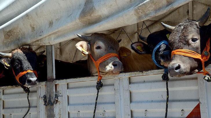 Kurban Bayramı öncesi veterinerlerden dikkat çeken uyarı!