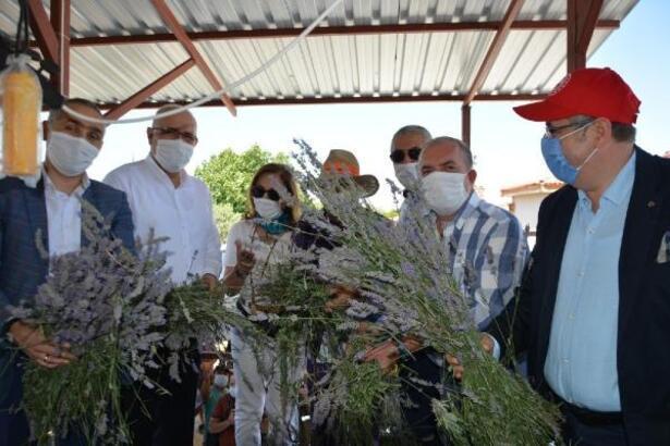Salihli'de şenlik havasında lavanta hasadı