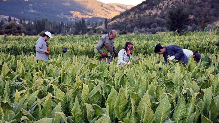 Tütün ihracatçılarından doldurulmuş makaron satışına hapis cezasına destek