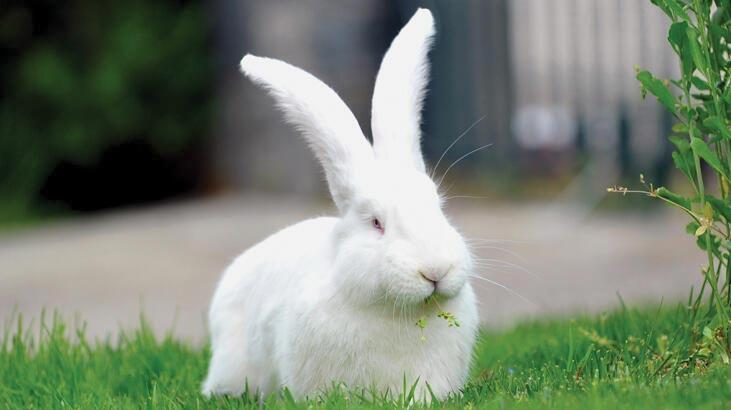 Tavşan Ne Yer, Nasıl Beslenir? Tavşanların Sevdiği Besinler Nelerdir?