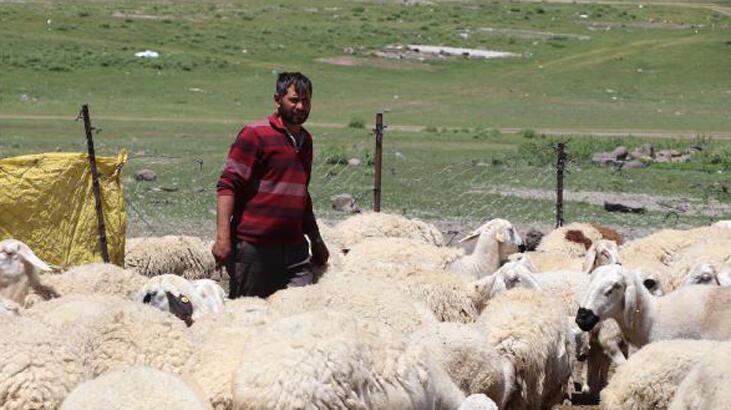 4 bin lira maaşla çalıştıracak çoban bulamıyorlar