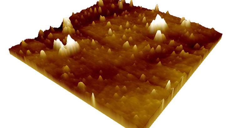 Türk bilim insanları başardı! Corona virüsün mikroskobik görüntüleri yayınlandı